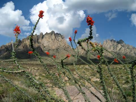 Organ Mountains2